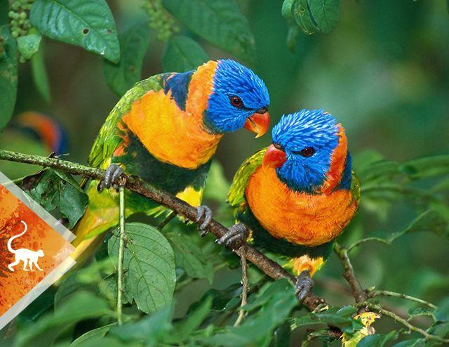 Avistamiento de aves - aves - Colombia -ColombiaTours.Travel - - Santuario de Fauna y Flora Otún Quimbaya