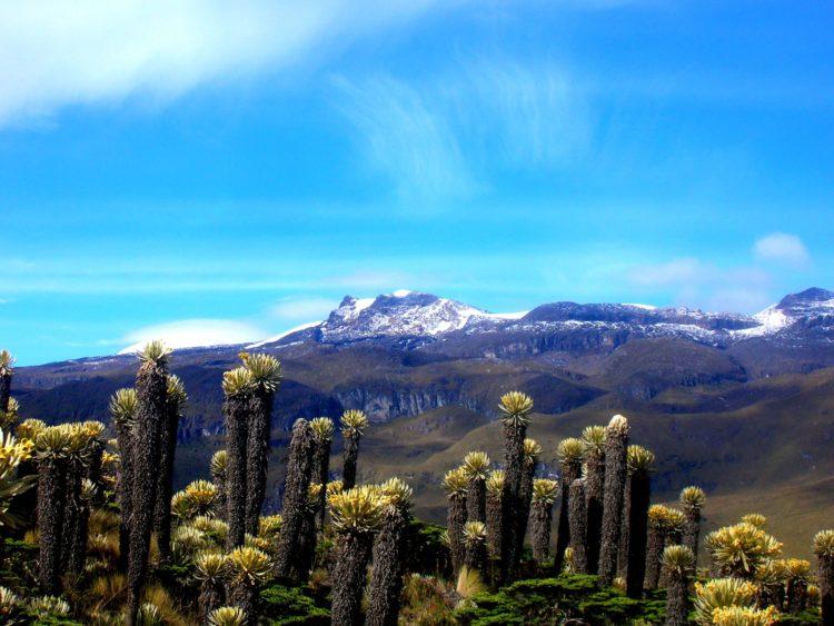 Laguna-del-Otun-Frailejones-colombia-manizales