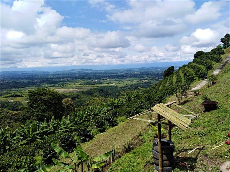 High Mountain Plan in the Coffee Axis - Colombia - Tourist Plan - Coffee Cultural Landscape - Coffee Tour - Coffee Hub Altagracia Coffee Tour