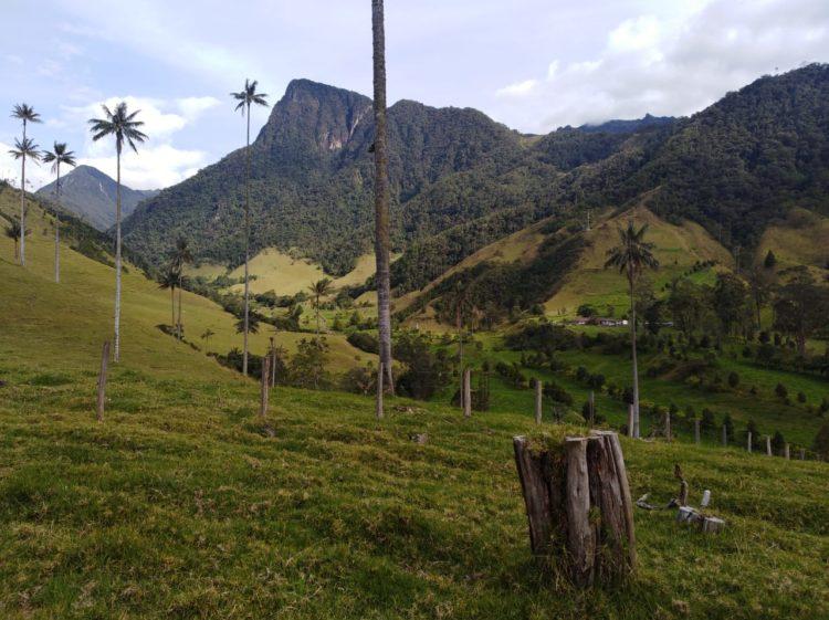 Cocora Salento Valley