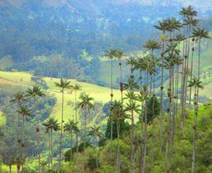 Palms of wax and horse riding Valle de Cocora in Colombia. Cabana-Romantica-Valle-del-Cocora-Palma-de-Cera-Salento-Quindio-Colombia