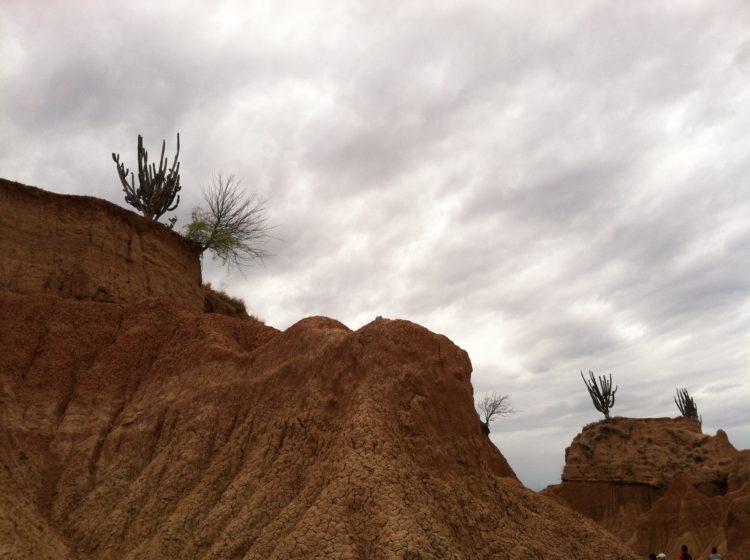 Cactus - Desierto de la Tatacoa - Paisaje - Colombia