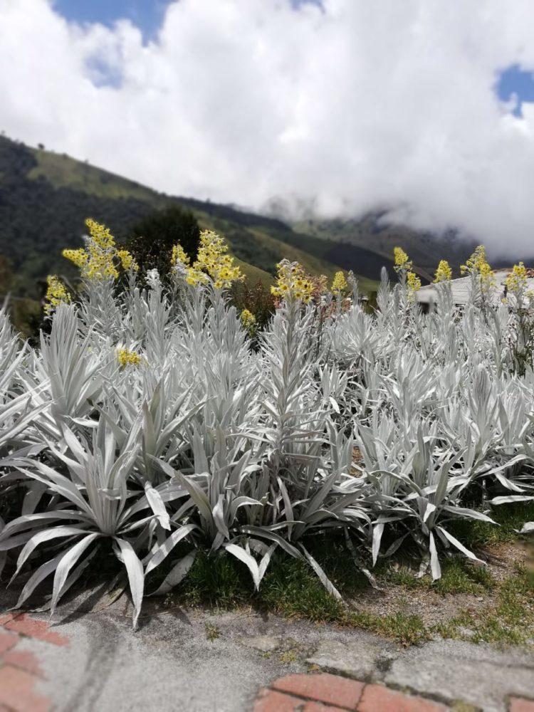 Nevado del Ruíz - Los Nevados National Natural Park - Colombia - High Mountain - Tourist Plans - Hot Autumn