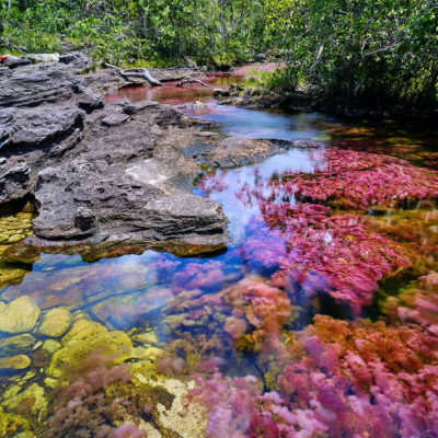 Caño Cristales in Colombia