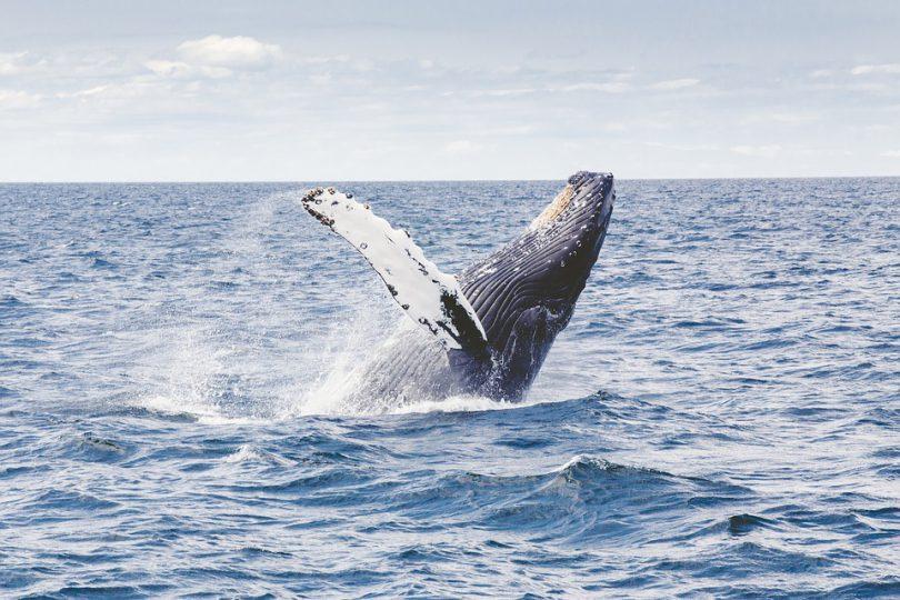 Nuquí a paradise of whales