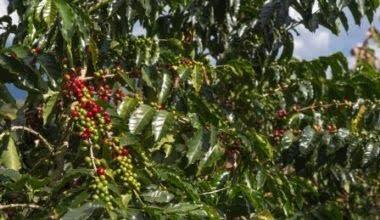 Eje Cafetero Caldas- Colombia - Coffee Cultural Landscape
