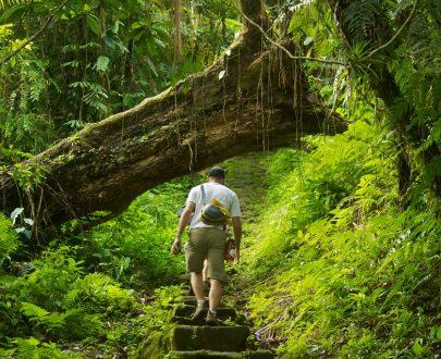 Bosque ciuidad Perdida