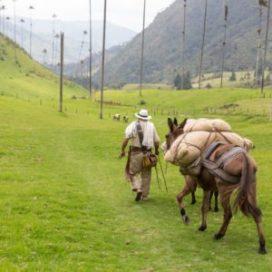 Arma tu plan al Eje Cafetero - Planea tu viaje a Colombia - ColombiaTours.Travel