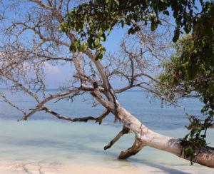 Isla Múcura Tronco