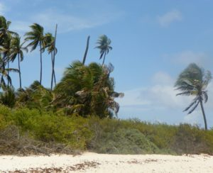 San Andres palm trees