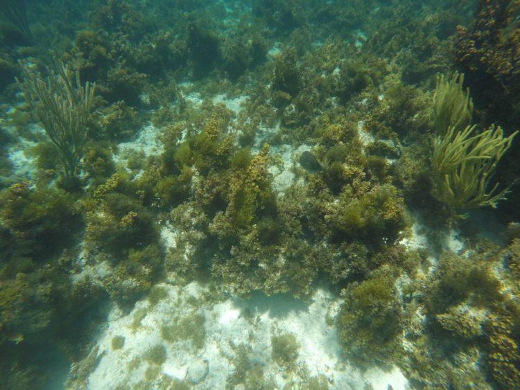 Tour Acuario y Hans Cay