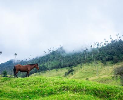 Caminata Valle del Cocora - Planea tu viaje a Colombia - ColombiaTours.Travel