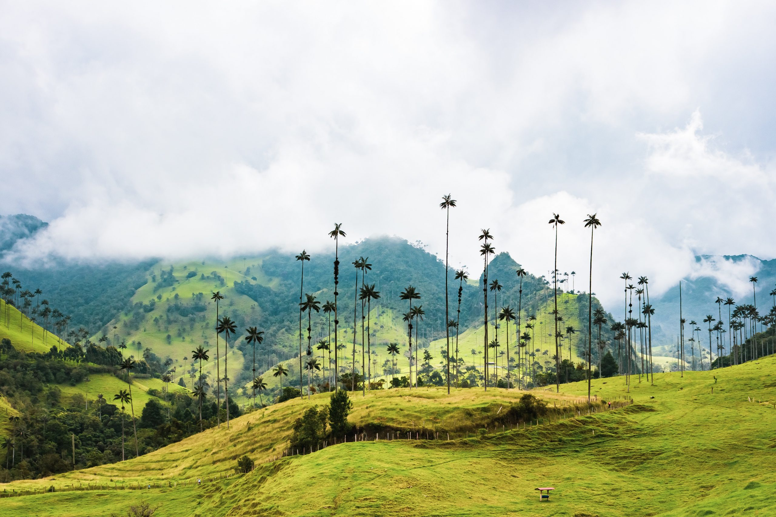 Viajar a Colombia en Pandemia